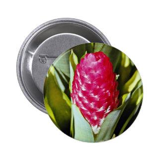 Flor roja quesnelia del bromeliad del francés Guy Pins