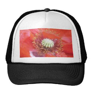 Flor roja romántica de la amapola gorras de camionero