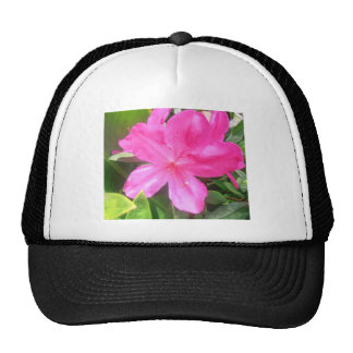 flor roja rosácea preciosa gorras de camionero