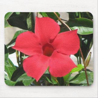 Flor roja tapete de ratón