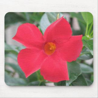 Flor roja tapetes de ratones