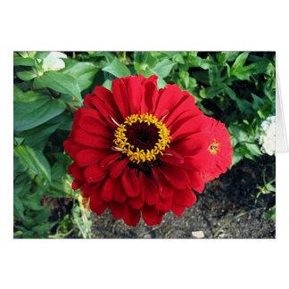 Flor roja tarjeta pequeña