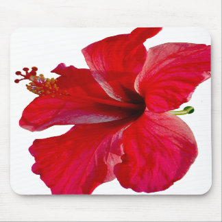 Flor roja tropical del hibisco tapetes de raton
