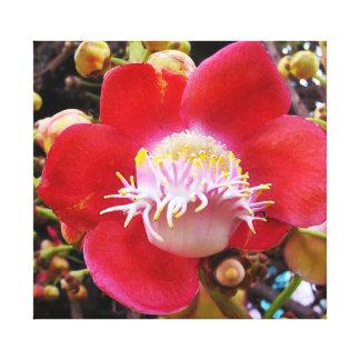 flor roja tropical lona estirada galerias