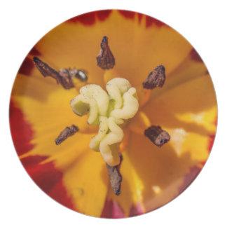 Flor roja y amarilla del tulipán plato para fiesta
