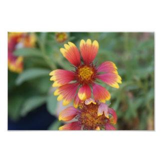 Flor roja y amarilla fotos