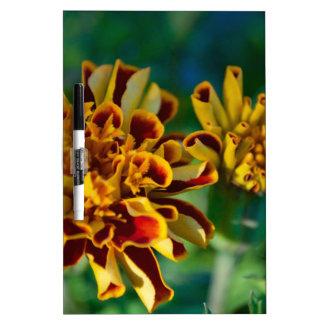 Flor roja y amarilla (primer) pizarras blancas de calidad