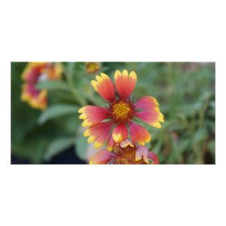 Flor roja y amarilla tarjetas personales con fotos