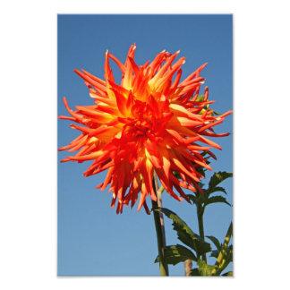Flor roja y anaranjada impresion fotografica