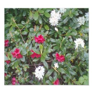 flor roja y blanca