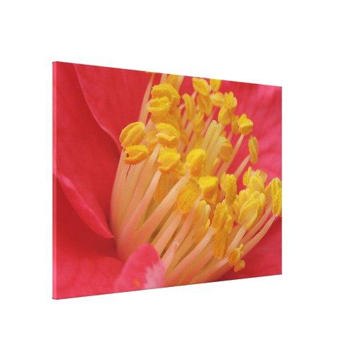 Flor roja y estambre amarillo impresión de lienzo