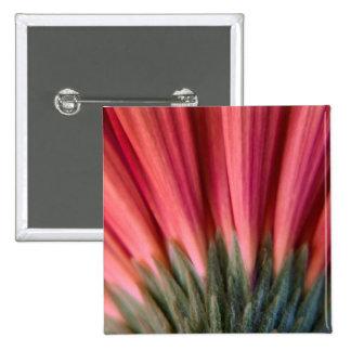 Flor roja y rosada macra abstracta del Gerbera Pin