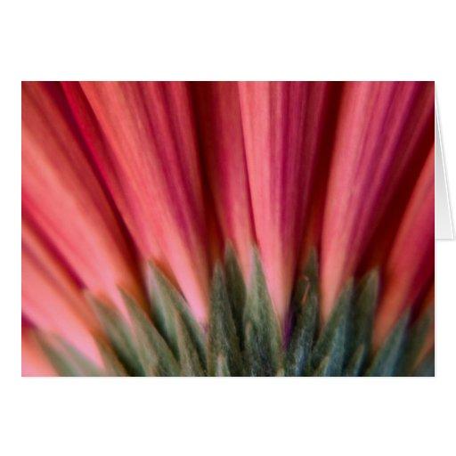 Flor roja y rosada macra abstracta del Gerbera Tarjeta De Felicitación