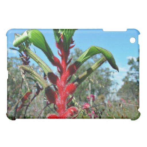 Flor roja y verde de la pata de canguro