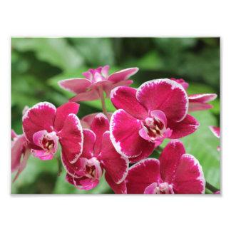 Flor rojo de la orquídea impresiones fotográficas