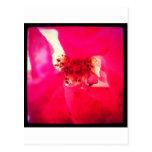 Flor rojo postales