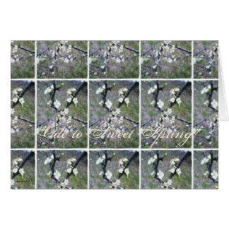 Flor romántico rústico del ciruelo tarjetas