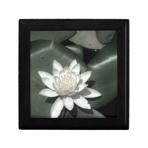 flor rosa clara blanca del lirio de agua del loto cajas de joyas