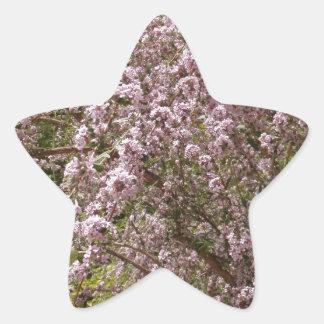 Flor rosa claro del árbol pegatina en forma de estrella