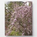 Flor rosa claro del árbol placa para mostrar