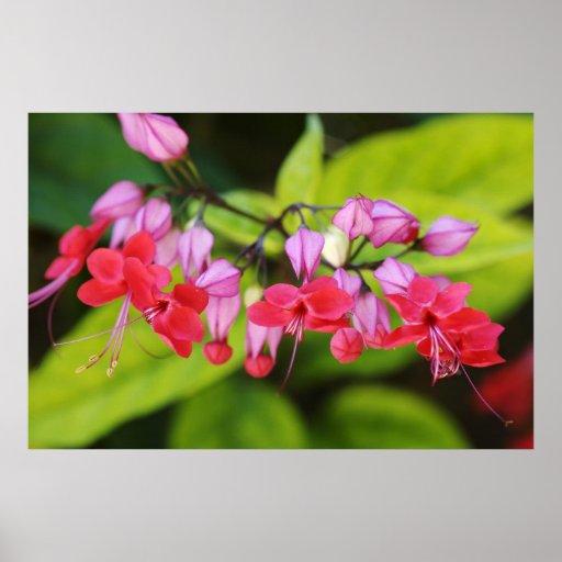 Flor rosada 01 póster