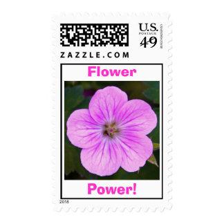 flor rosada 1, envio