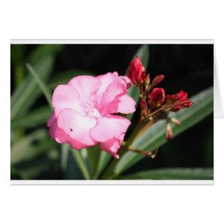 Flor rosada 2 Italia Tarjeta