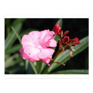 Flor rosada 2 Italia Tarjetas Postales