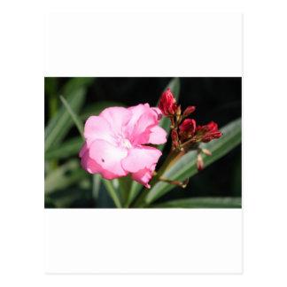 Flor rosada 2 Italia Postal