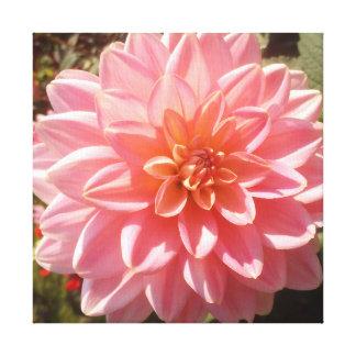 Flor rosada bonita de la dalia lona envuelta para galerias
