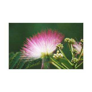 Flor rosada bonita del Mimosa Impresiones En Lienzo Estiradas