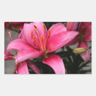 Flor rosada bonita en la floración y brotes pegatina rectangular
