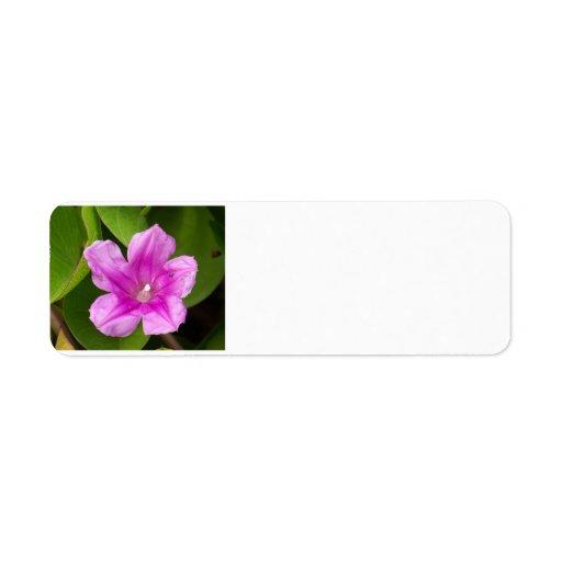 Flor rosada bonita etiqueta de remite