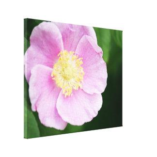 Flor rosada bonita impresiones en lona estiradas