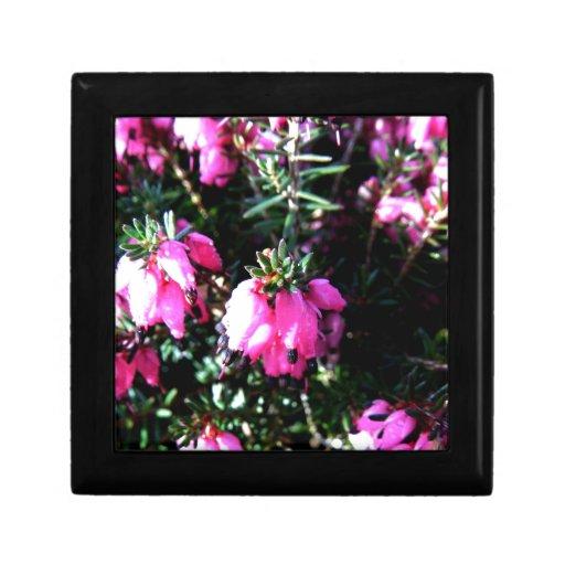 Flor rosada cajas de regalo