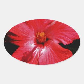 Flor rosada caliente del hibisco en negro