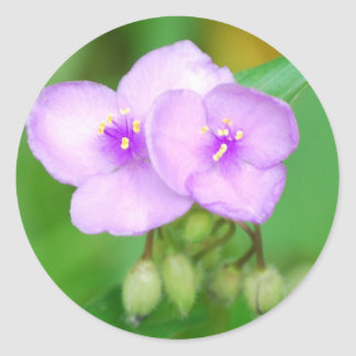 flor rosada con los brotes pegatina redonda