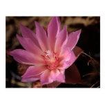 Flor rosada de Bueatiful Postal