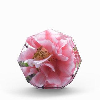 Flor rosada de Camelia