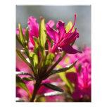 flor rosada de estallido membrete
