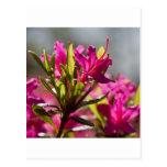 flor rosada de estallido postal