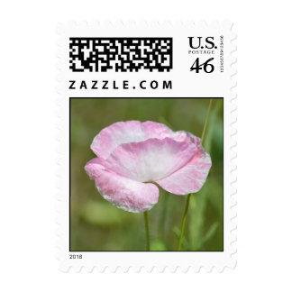 Flor rosada de la amapola de Islandia