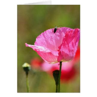 Flor rosada de la amapola de Islandia Felicitación