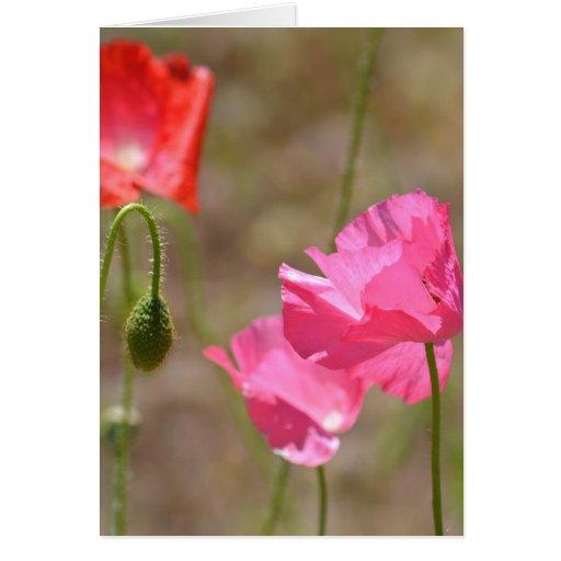 Flor rosada de la amapola de Islandia Tarjeton