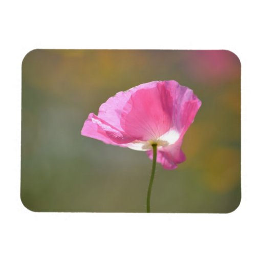 Flor rosada de la amapola iman de vinilo