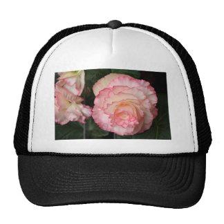 Flor rosada de la begonia en la floración gorras de camionero