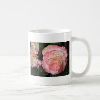 Flor rosada de la begonia en la floración taza