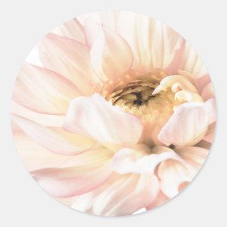 Flor rosada de la dalia - las dalias modificaron l pegatinas redondas