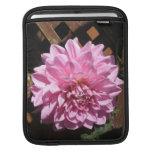 Flor rosada de la dalia manga de iPad