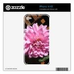 Flor rosada de la dalia skins para eliPhone 4S